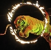 Цирки в Зюзельском