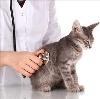 Ветеринарные клиники в Зюзельском
